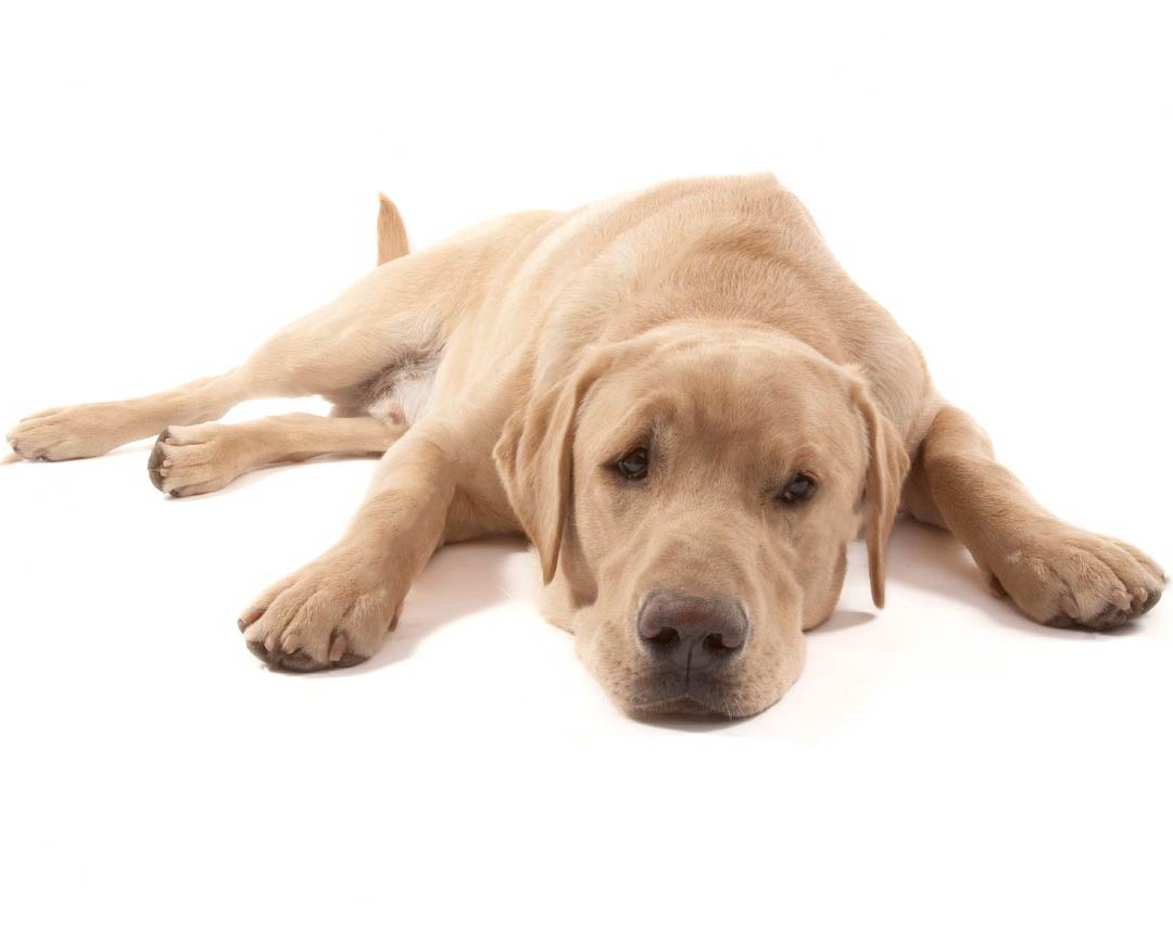 euthanasia is it humane Especially when euthanasia is involved some people may feel they would never want another pet for some, the thought of having—and eventually losing—another pet.